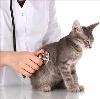 Ветеринарные клиники в Амбарном